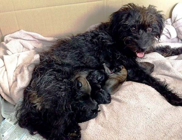 Pepper with her 6 puppies