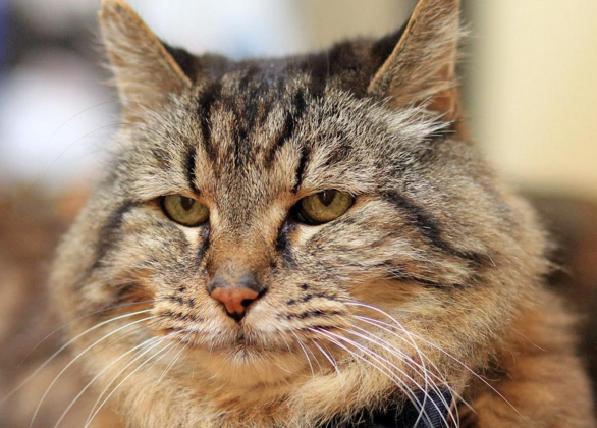 oldestlivingcat